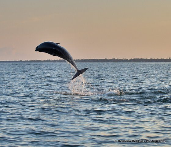 jumping-dolphin2