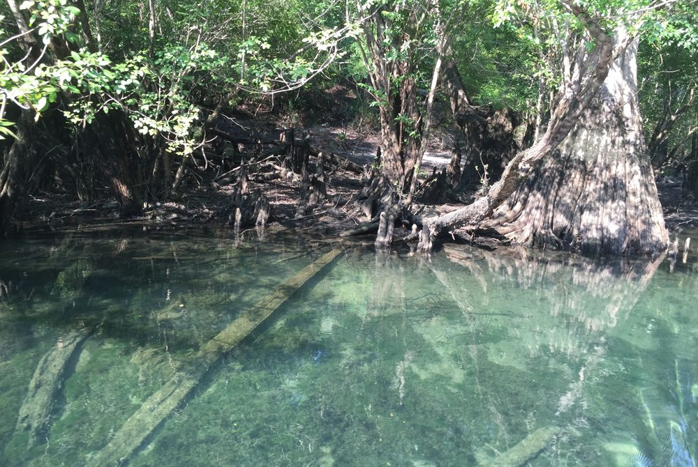 The water at River Run Springs is crystal clear.