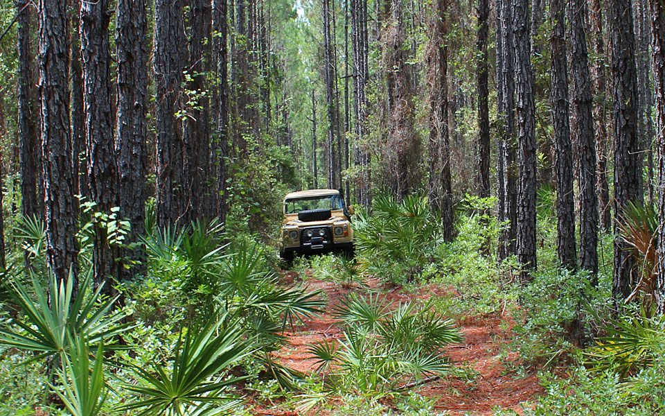Truman-in-the-Woods-960-b