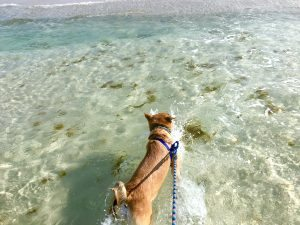 Let your dog jump in the Gulf for a morning swim!