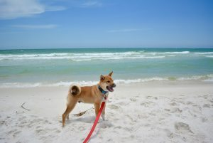Everything You Need to Know About Dogs in South Walton