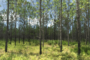 A Guide to Hiking in South Walton, Florida