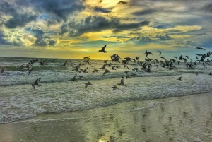 The Five Beachiest Birds to Look for in the Sand and Skies
