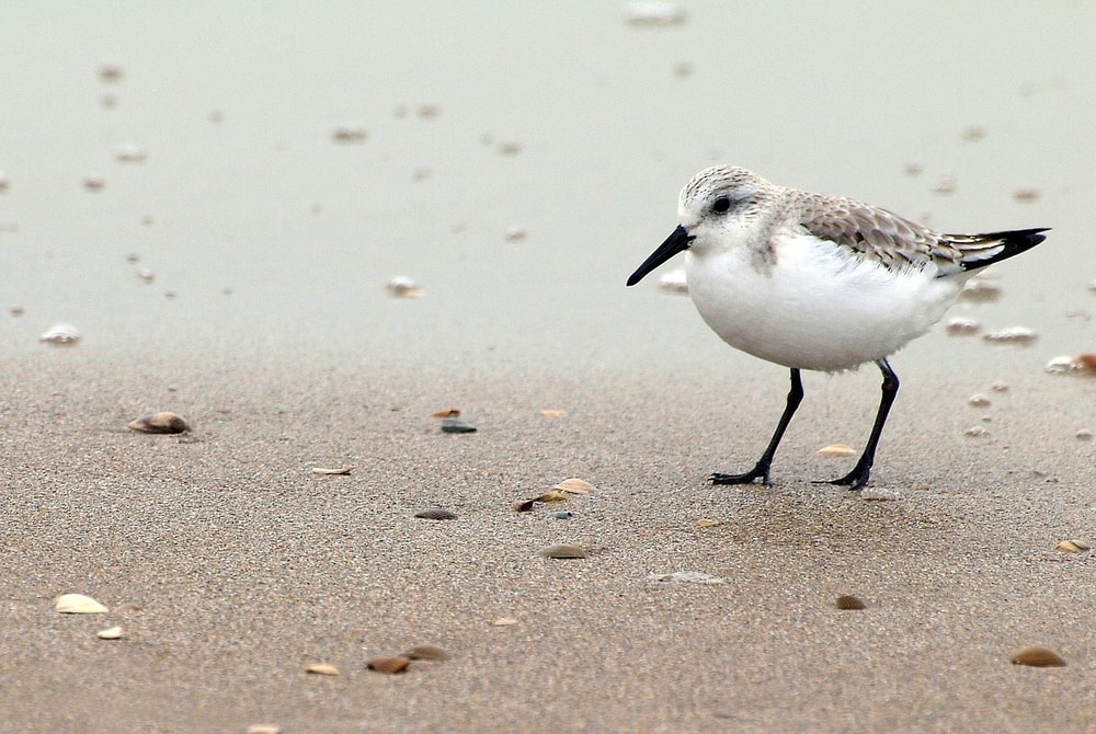 The Five Beachiest Birds to Look for in the Sand and Skies ...