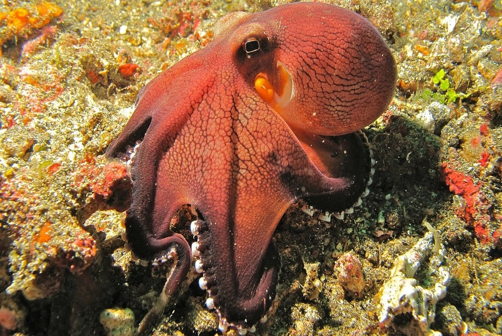 10 astounding facts about octopuses 30a