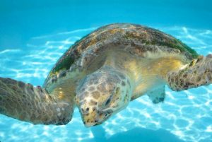 The Truth About Sea Turtles in South Walton