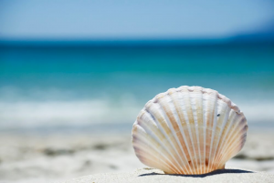 Master of the Shells: More Passion Than Hobby