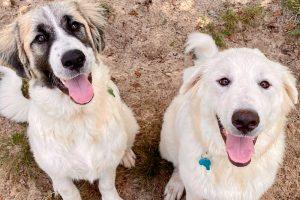 Alaqua Animal Refuge Announces Plans to Move to Future Home