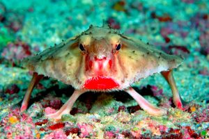 7 Fish So Ugly Only Their Mothers Can Love Them