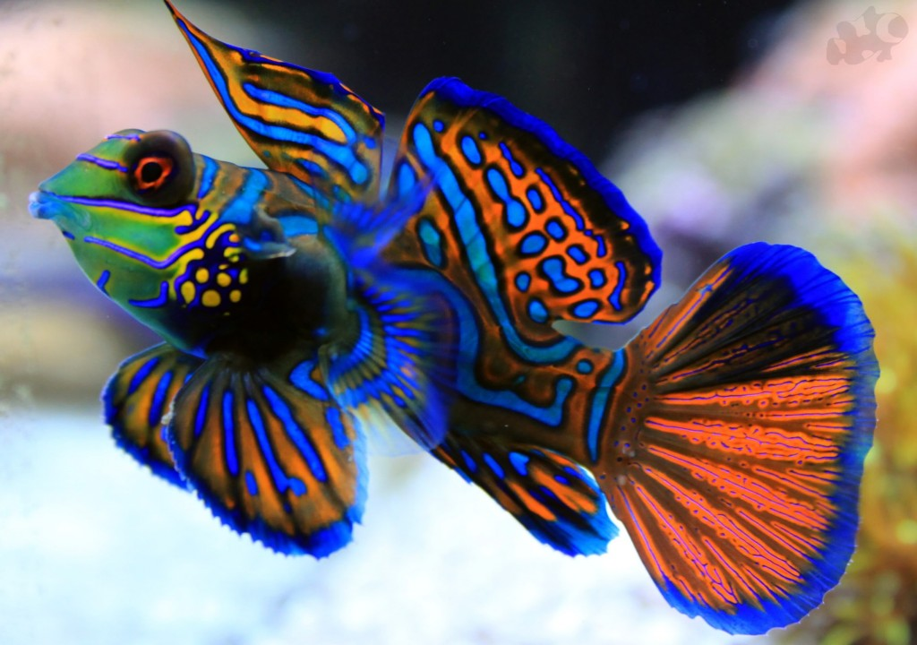 Nine of the World's Most Gorgeous Fish