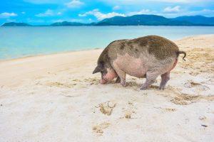 Beaches Abroad: Koh Madsum