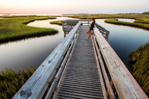 Cape San Blas: The Road To Recovery