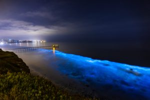 How Bioluminescence Works in Nature